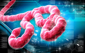 ebola- more to know