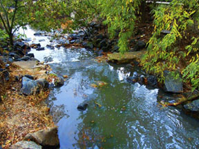 anacostia river - bruce mcneil