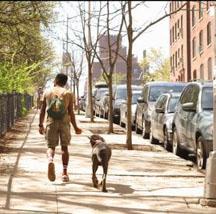 dog walker, my everyday hustle